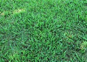 is it crabgrass or dallisgrass