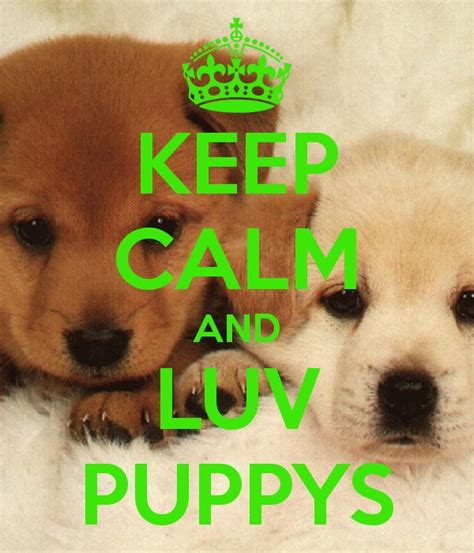 calm puppy 17 images about puppys on keep calm pet sitting and my birthday