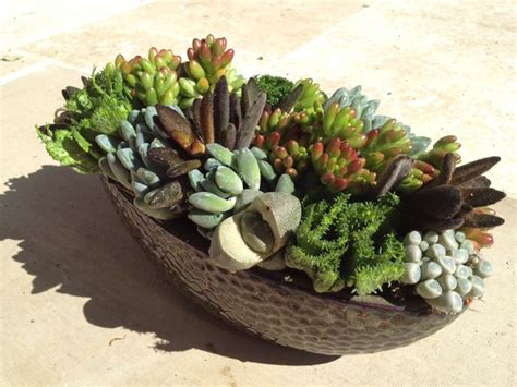 succulent containers for sale succulent landscapes gardens containers contemporary