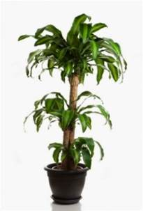 Tropical Foliage House Plants - house plants tropical kootation blogspot com