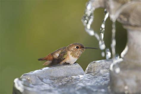 hummingbird food what do hummingbirds eat