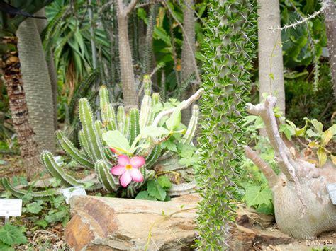 Impressionnant Serres De Jardin Castorama #2: Serres-Jardin-des-plantes-Nantes-9.jpg