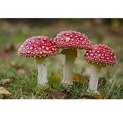 Mushrooms  Natures Recyclers And Pollution Zappers The Green
