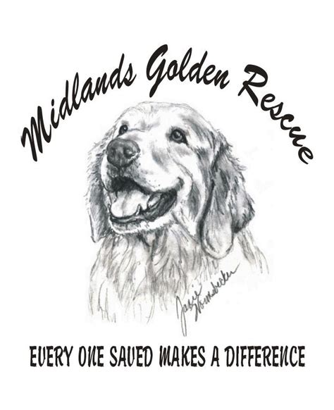 uk golden retriever rescue golden retriever rescue uk midlands dogs in our photo