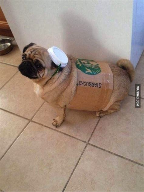 starbucks for dogs doggie style adorable costumes for dogs messiah