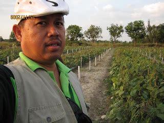 Mung Beans Kacang Hijau 1 Kg Berkualitas anim agro technology kacang hijau