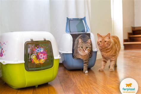 lettiere chiuse per gatti come educare un gatto se non usa la lettiera e graffia i
