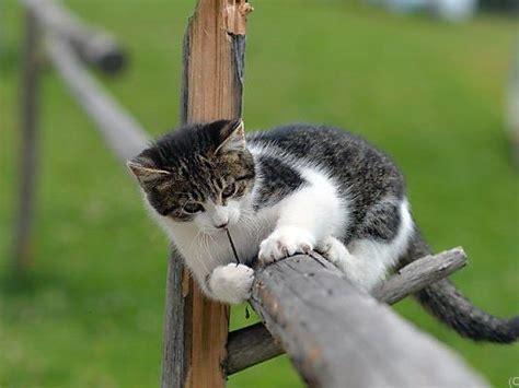 ab wann werden katzen rollig kastrationspflicht ab 1 april auch katzen auf