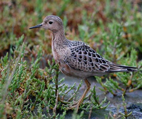 vancouver island birds