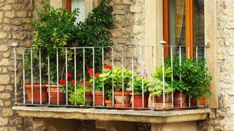 imagenes jardines y balcones plantas de temporada oto 241 o invierno para terraza y balc 243 n