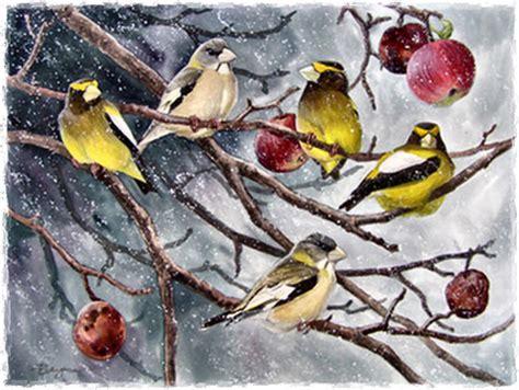 next wallpaper gold birds band of gold birds 1 birds animals background