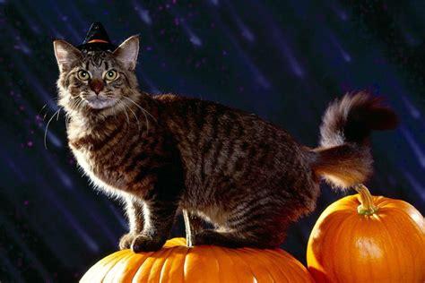 imagenes halloween gato los 10 mejores disfraces de halloween para gatos ideas