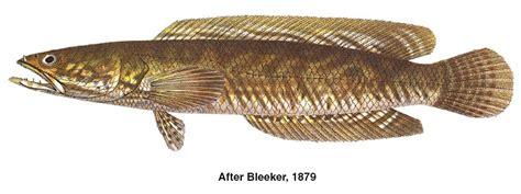 Ikan Tiruan pancing ikan di malaysia related keywords pancing ikan di malaysia keywords keywordsking