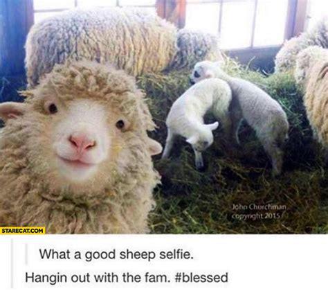 haircut sheep games selfie starecat com page 4
