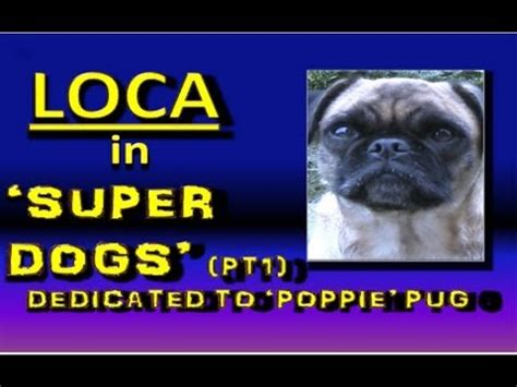 loca the pug is dead loca the pug goes to the vet doovi