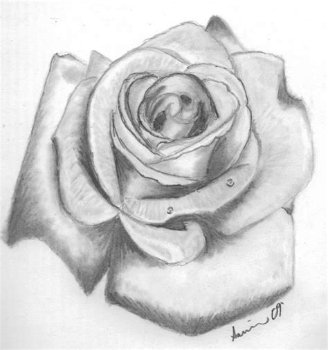rose tattoo by bloodysky on by bloodysky on deviantart