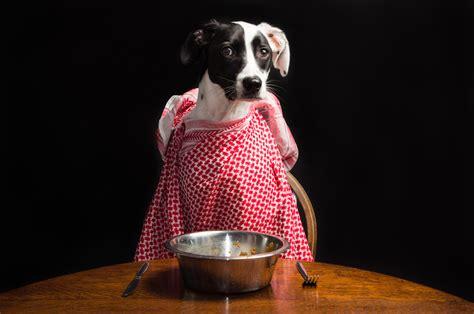 easy holiday meals     dog rovercom