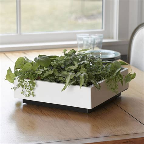 Green Wall Planters by Living Green Wall Tabletop Planter The Green
