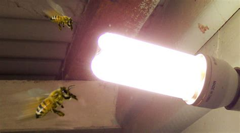 Are Bees Attracted To Light are bees attracted to light bee best bee removal