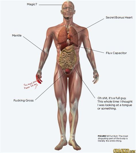 fun fact   disgusting part   human body