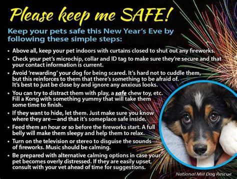 new year animal places bichonpawz keep your pets safe this new year s