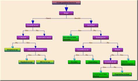 professional flowchart professional flowchart activex ocx