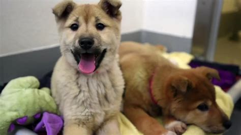 puppy adoption san francisco 10 dogs you can adopt from the san francisco spca right now kqed pop kqed arts