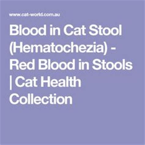 Blood In Stool In Cats Causes by 1000 Images About Feline Health And Happiness On