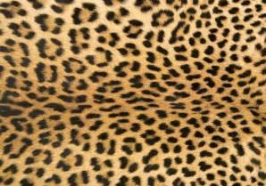 Tiger Area Rug Foflor Leopard Print Rug Doormat Runner Area