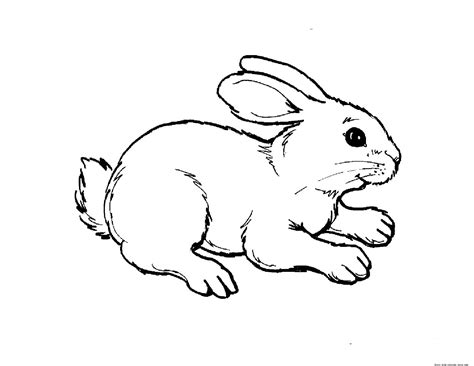 coloring book animals printable print out animal rabbit pictures colouring pages for