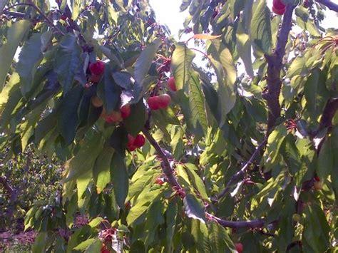 may 171 2013 171 earl s organic produce