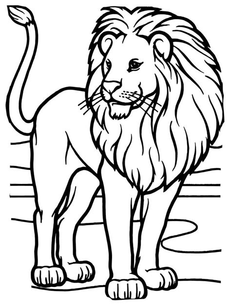 african lion coloring pages 112 best images about lions and tigers on pinterest