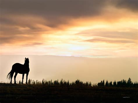 Best Home Decor Blog by Wild Horse Sunset Photograph By Leland D Howard