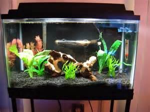 Small Home Aquarium Ideas Advices Fish Tank Decoration Ideas Freshwater Aquariums