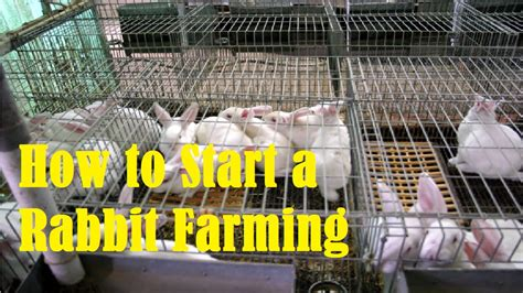 Starting A Small Home Farm How To Start A Rabbit Farming