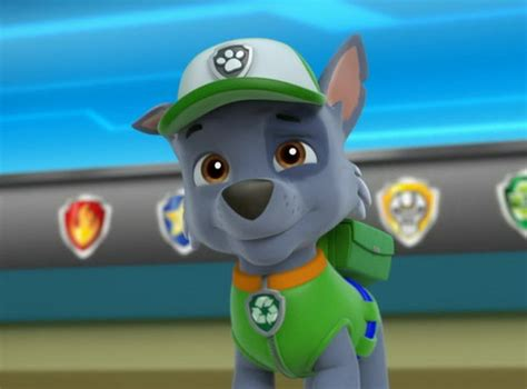 paw patrol breeds paw patrol images rocky the mixed breed hd wallpaper and background photos 40126961