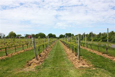 sherwood house vineyard sherwood house vineyard property sells for 1 8 million suffolk times suffolk times
