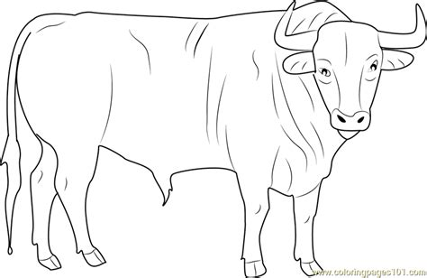 bull coloring asteroid bull coloring pages coloring pages