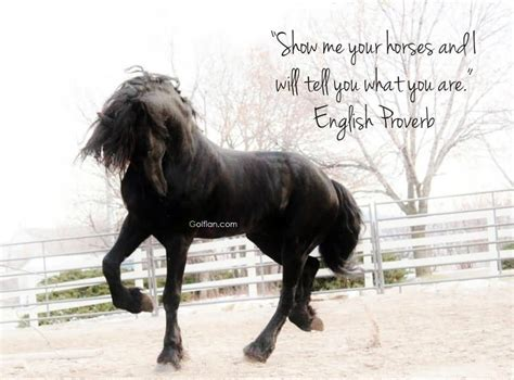 quotes about horses 50 best quotes horses mare sayings images