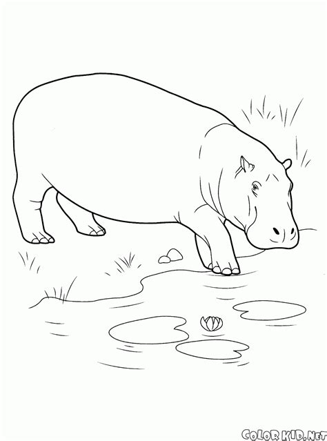 Dibujo para colorear - Animales salvajes
