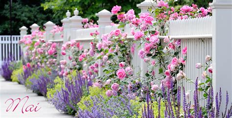 Garten Pflanzen Mai by Aldi S 220 D Gartenkalender Mai