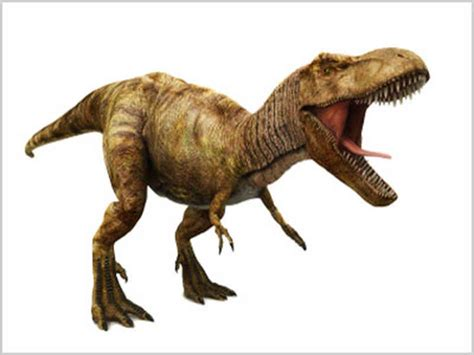 t rex dinosaur boneheads one man s search for t rex npr