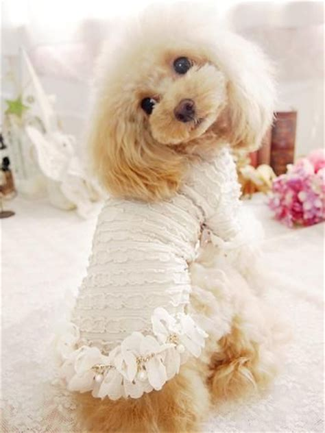 puppies in clothes 25 best ideas about dogs in clothes on photos and