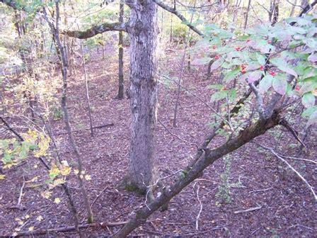 75 twilight ridge led tree stand hunts 9 and 10