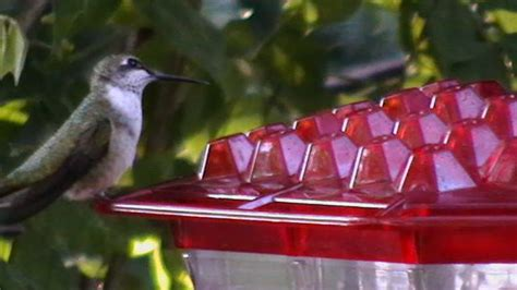 top 28 best place to hang hummingbird feeder use