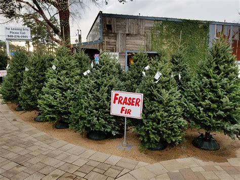 houston garden center christmas trees how to care for your tree best houston garden center kingwood tx warren s