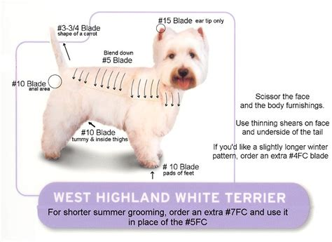West Highland White Terrier Shedding by Stately Warren Manor Grooming Do I Take The Plunge