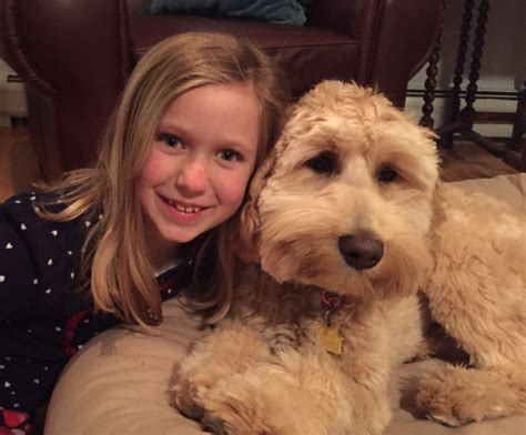 doodle user review our goldendoodle puppies are for salelooking for a loving