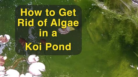 how to get rid of moss on patio stones image gallery koi pond algae treatment