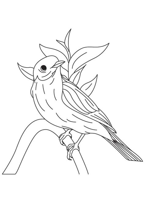 western bluebird coloring page